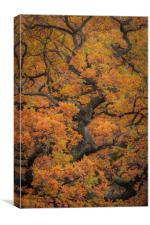 Autumn Tree , Canvas Print