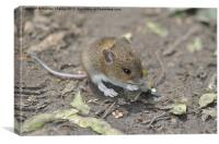 Field Mouse, Canvas Print