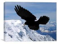Alpine Chough flying in the French alps, Canvas Print