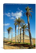 Palm Trees, La Oliva, Fuerteventura, Canvas Print