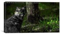 Nice gray cat with green eyes in the forest , Canvas Print
