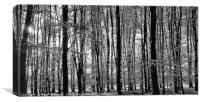 Tall Trees in The Black & White Woods , Canvas Print