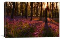 Morning in the Bluebell Wood, Canvas Print