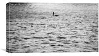 A Lone Diver On the Water                  , Canvas Print