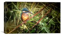 Kingfisher at the Teifi, Canvas Print
