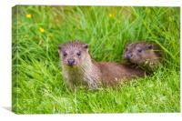 Two young river otters, Canvas Print