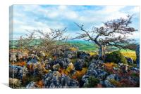 Hawthorn trees and limestone pavement, Canvas Print