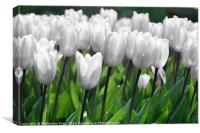 Even white flowers are beautiful, Canvas Print