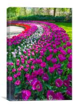 Pink and Purple, Canvas Print