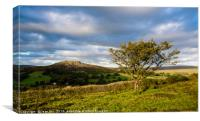 Sheeps Tor and Hawthorn. Late afternoon., Canvas Print