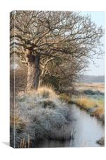 Frozen river and tree, Canvas Print