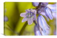 Blue Bell in Macro, Canvas Print