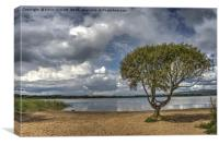 Lonely Tree, Kenfig Pool, South Wales, Canvas Print