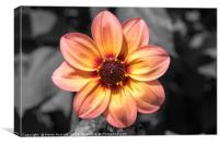 Flame and pink flower, Canvas Print