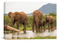 Elephant recreational time at the waterhole , Canvas Print