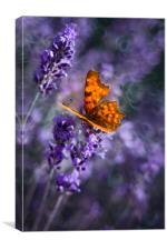 Butterfly on lavender flowers., Canvas Print