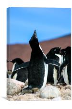 Penguin mating call, Canvas Print