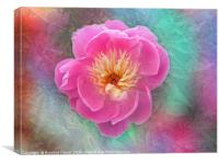 Chinese peony with texture, Canvas Print