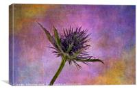 Eryngium head with texture, Canvas Print