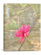 Peach tree blossom with texture, Canvas Print
