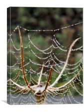 Spiders Web, Canvas Print