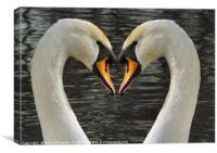 Swans Heart To Heart, Canvas Print