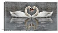 Full Swans Heart To Heart With Reflection, Canvas Print