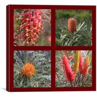 Collection of Australian Proteaceae flowers, Canvas Print