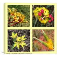 Collection of yellow Australian wildflowers, Canvas Print