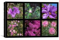 Collection of Australian wildflowers in purple, Canvas Print