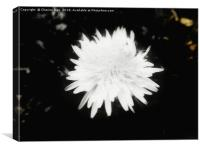 Black and white yellow dandelion flower, Canvas Print