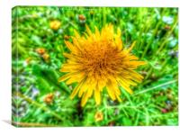 HD yellow dandelion flower, Canvas Print