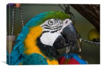 Macaw Portrait, Canvas Print