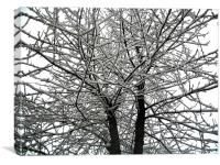 Snow on tree branches , Canvas Print