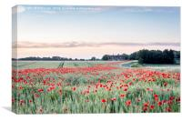 River of Poppies, Canvas Print