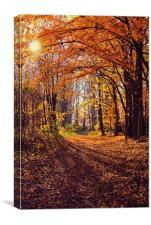 Autumn time, back light in the wood, Canvas Print