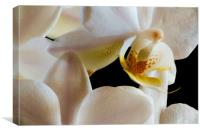 inside an orchid, Canvas Print