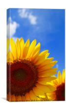 Sunflower Abstract , Canvas Print