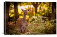 Young deer in forest glade, Canvas Print