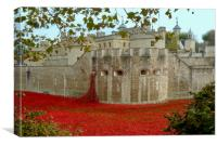 Poppies at The Tower of London 2014, Canvas Print