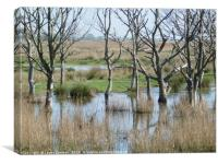 Hickling Nature Reserve , Canvas Print