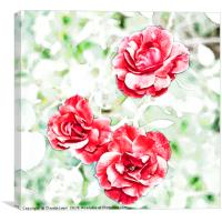 Dappled red roses, Canvas Print