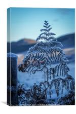 Highland Hoarfrost, Canvas Print