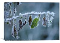 Highland Hoarfrost II, Canvas Print