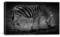 Amazing Zebra, Canvas Print