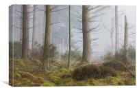 Misty trees, Inverness, Canvas Print