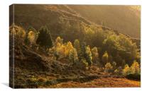 Autumn trees in afternoon light Nant Gwynant Wales, Canvas Print