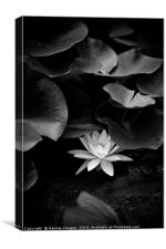 Hiding  Water Lily, Canvas Print