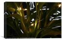 Light painting behind plants, Canvas Print
