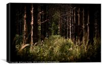 Trees in Thetford Forest, Canvas Print